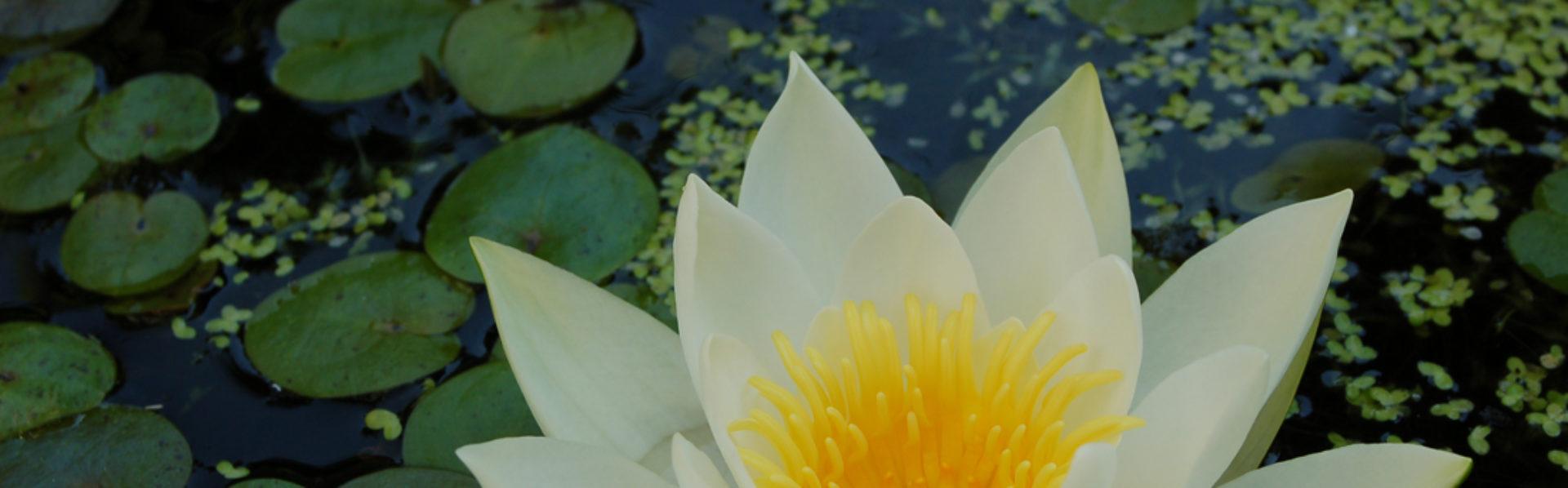 Praktijk voor Holistische Massage Christiaan Hendriks